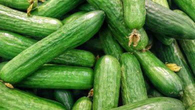 Gurke: Ernte, Pflege und Aussaat  Gurke Zuhause anbauen gurke selber zuhause anbauen 390x220