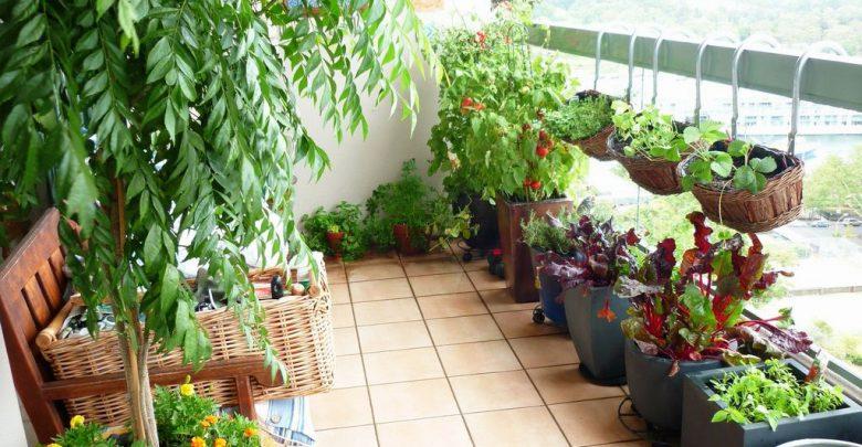 Heilkräuter selbst pflanzen heilkr  uter zuhause pflanzen 780x405