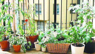 Kräutergarten anlegen: Richtig Pflegen & Ernten k  chenkr  uter anbauen 390x220