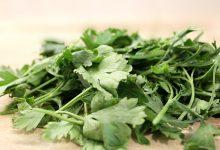 Petersilie: Ernte, Pflege und Aussaat  Zu Hause Petersilie pflanzen petersilie selber anbauen 220x150