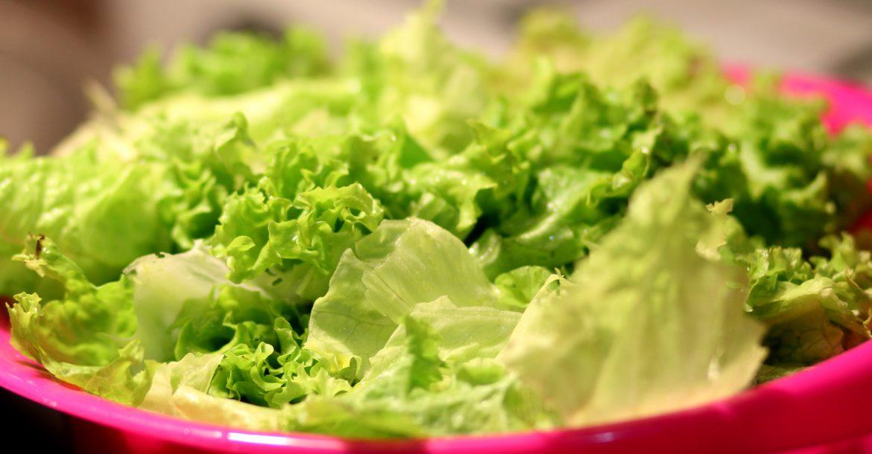 Salat: Ernte, Pflege und Aussaat  Pflücksalat Zuhause anbauen salat selber anbauen 1170x610