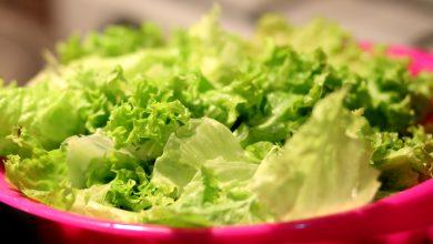 Salat: Ernte, Pflege und Aussaat  Pflücksalat Zuhause anbauen salat selber anbauen 390x220