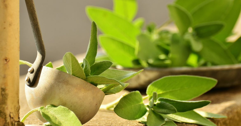 Salbei: Ernte, Pflege und Aussaat  Salbei Wirkung, Pflege und Ernte salbei pflege ernte anbau aussaat 1170x610