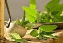Salbei: Ernte, Pflege und Aussaat  Salbei Wirkung, Pflege und Ernte salbei pflege ernte anbau aussaat 220x150