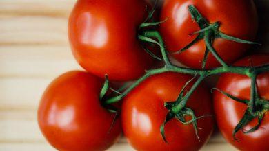 Tomaten Zuhause anbauen tomaten zuhause anbauen 390x220