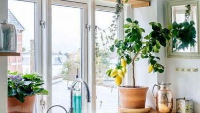 Einfach einen sinnlichen Küchen Kräutergarten anlegen Ku  chen Garten anpflanzen 2 390x220
