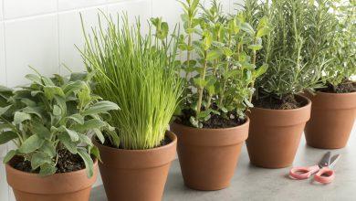 Diese 5 Kräuter und Gemüsesorten kannst du im Haus anbauen Kra  uter anbauen zuhause 390x220