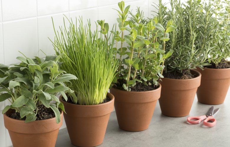 Diese 5 Kräuter und Gemüsesorten kannst du im Haus anbauen Kra  uter anbauen zuhause 780x500