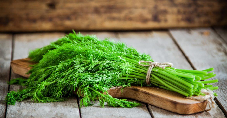 Zu Hause Dill pflanzen  Dill pflanzen – Bereicher deinen Kräutergarten! Zu Hause Dill pflanzen 1170x610
