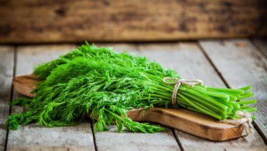 Zu Hause Dill pflanzen  Dill pflanzen – Bereicher deinen Kräutergarten! Zu Hause Dill pflanzen 390x220