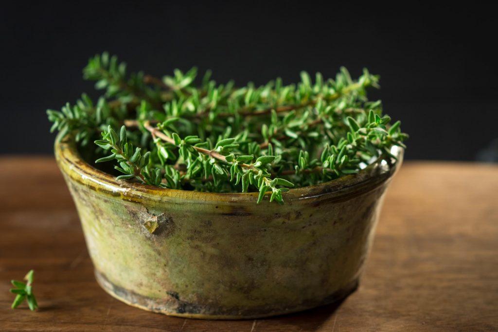 Thymian pflanzen – So machst du es richtig thymian pflanze wirkung 1024x683